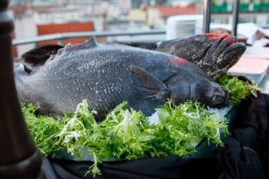 Catering Černá Labuť | Grilování v Černé Labuti